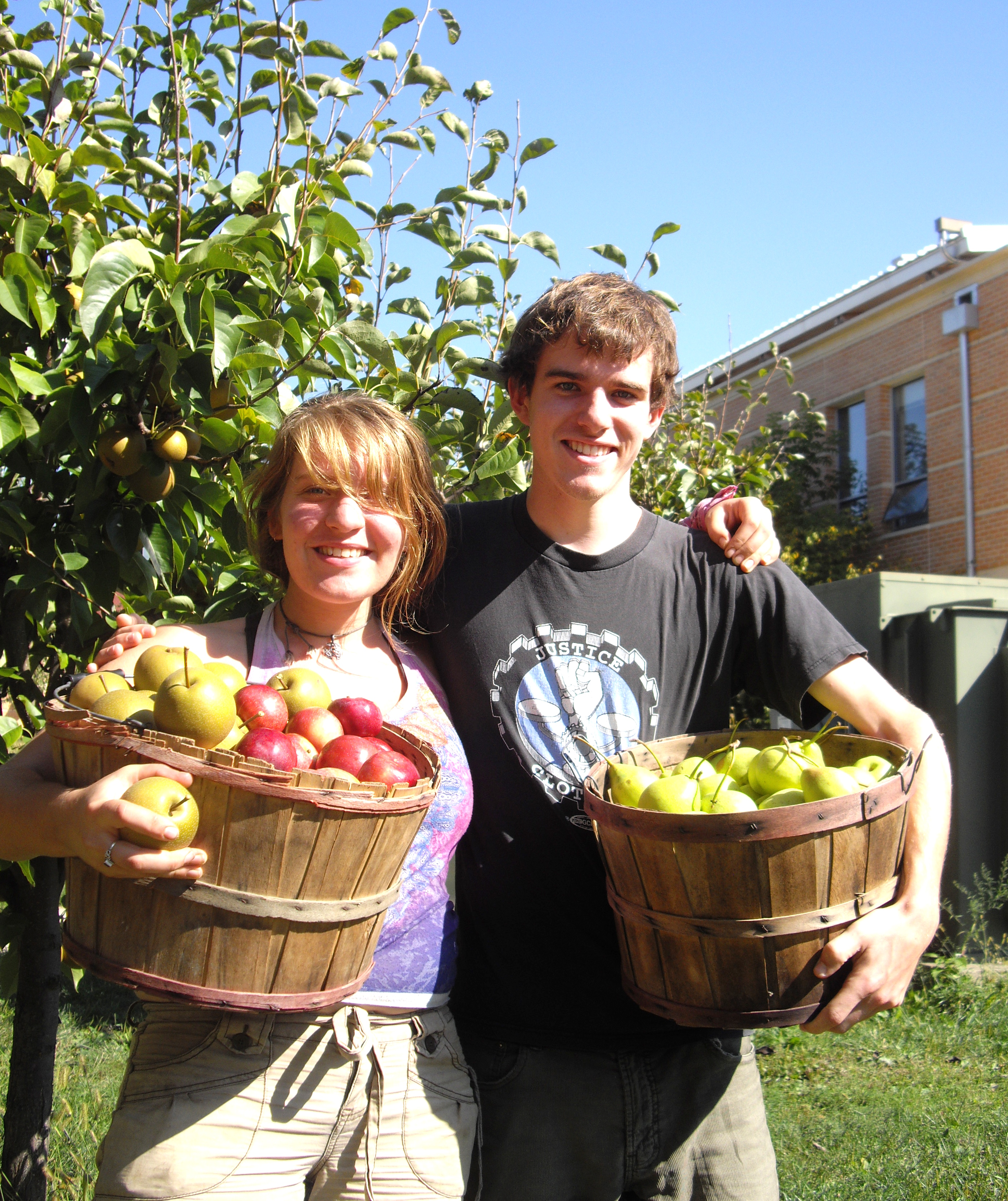 College students harvest apples in the AJLC Orchard